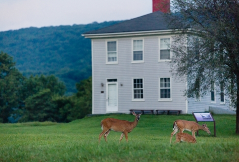 HISTORY-Murphy Farm in HF with deer